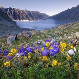 отдушка альпийские цветы