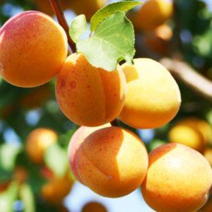 отдушка абрикос