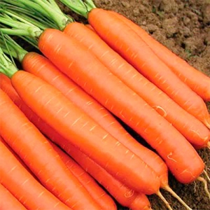 Морковь ароматизатор