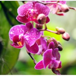 отдушка орхидея и манго
